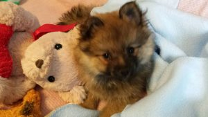 Meet Baxter, born April 29, 2016.